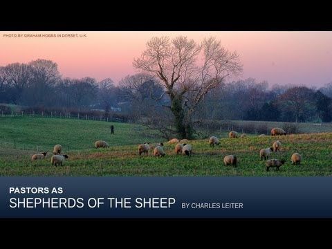 Pastors As Shepherds of the Sheep