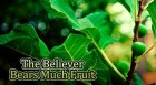 The Believer Bears Much Fruit